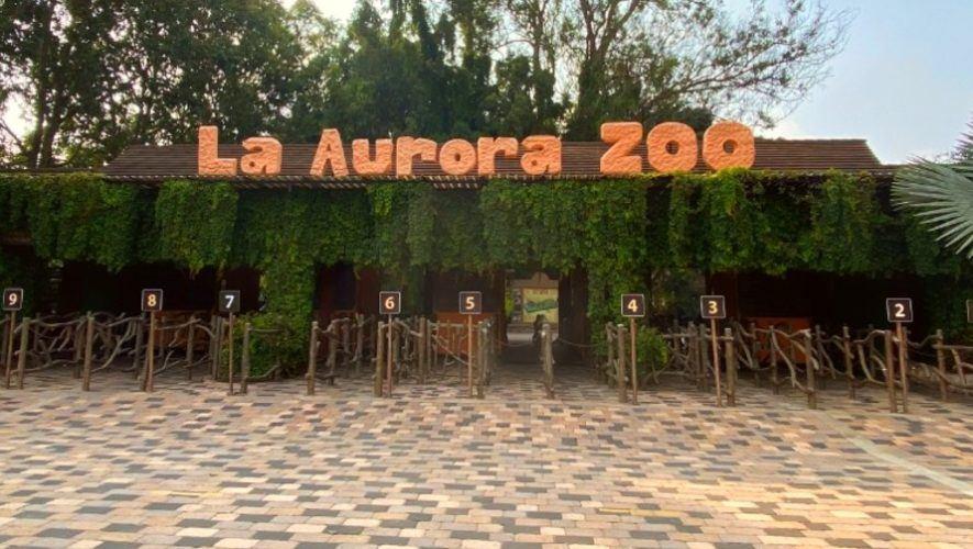 Entrada gratis para papás guatemaltecos al Zoológico La Aurora | Junio 2021