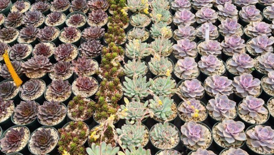Exposición de plantas exóticas en Antigua Guatemala   Junio 2021