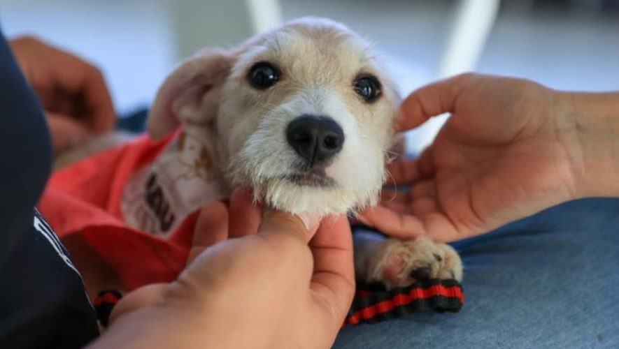 Feria de adopción de mascotas en la Ciudad de Guatemala | Junio-Julio 2021