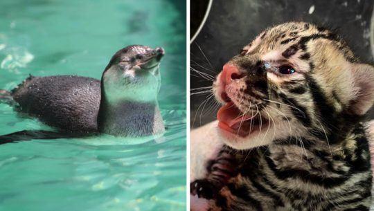 Fotos de los bebés que habitan actualmente en el Zoológico La Aurora