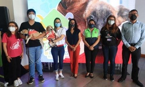 Guatemaltecos podrán participar en feria de adopción de mascotas