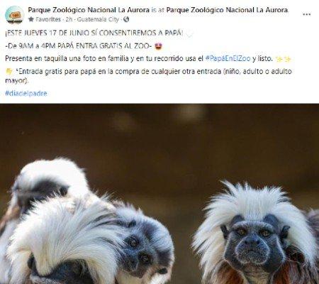 Papás guatemaltecos podrán entrar gratis al Zoológico La Aurora