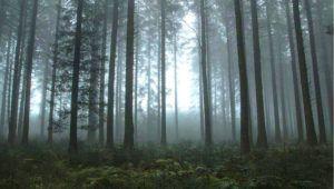 Recorrido por Senderos de Terror en el Parque Ecológico Kanajuyú en la Ciudad de Guatemala   Junio 2021