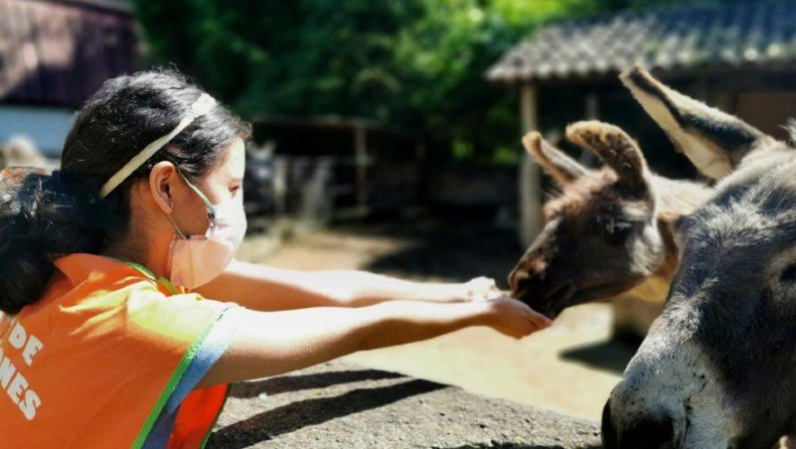 Zoológico La Aurora ofrece curso presencial de vacaciones para niños, julio 2021