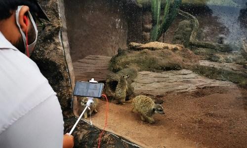 cursos virtuales de vacaciones niños guatemala zoologico la aurora