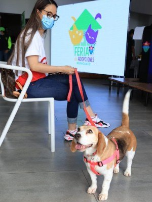 feria de adopcion de mascotas municipalidad de guatemala 2021+
