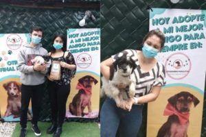 Feria de adopciones de mascotas Ayudando Huellitas GT   Julio 2021