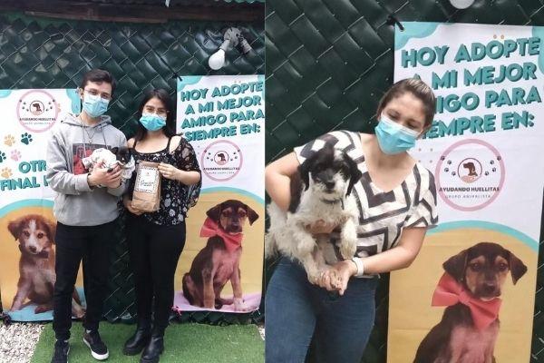Feria de adopciones de mascotas Ayudando Huellitas GT | Julio 2021