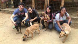 Feria de adopciones de mascotas en Sumpango, Sacatepéquez   Agosto 2021