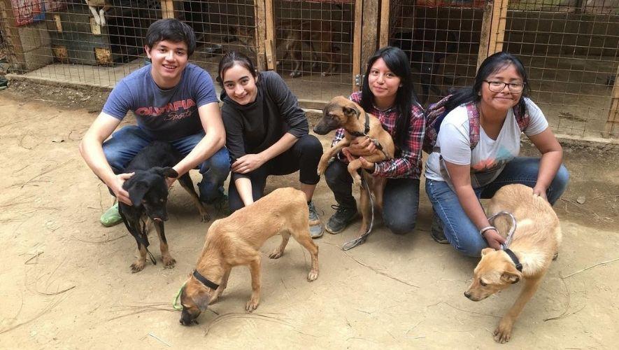 Feria de adopciones de mascotas en Sumpango, Sacatepéquez | Agosto 2021