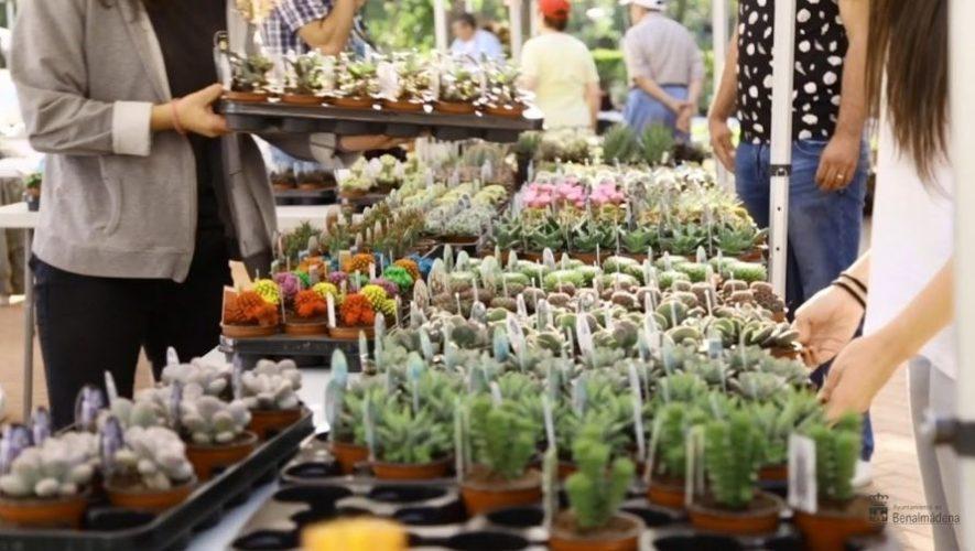 Festival de Plantas Exóticas y Suculentas en Ciudad de Guatemala   Julio 2021
