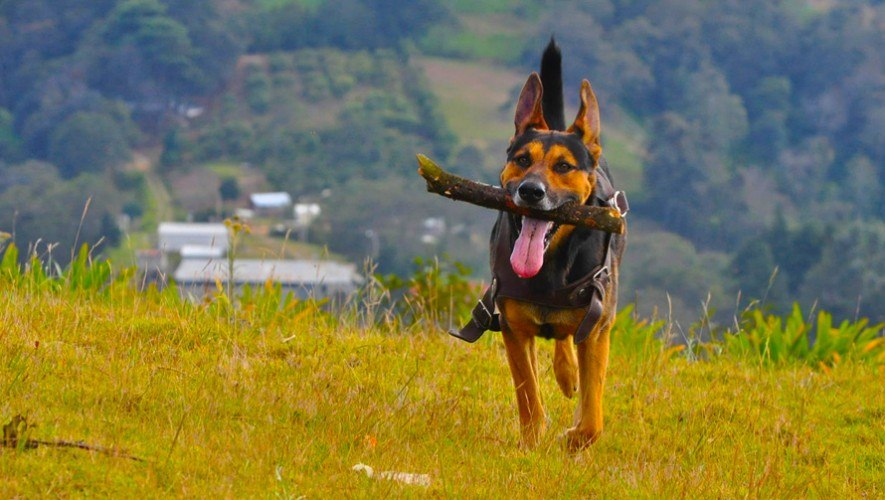 Hobbitenango lugar para llevar a pasear a perros Guatemala
