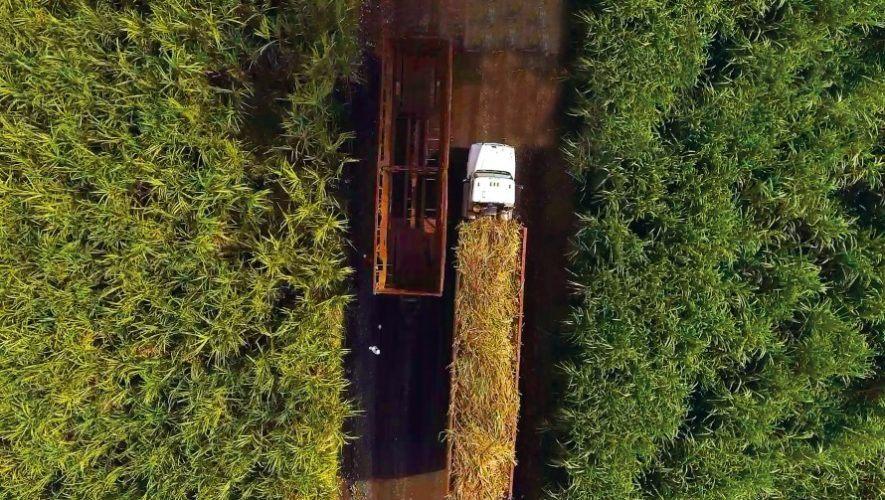 Ingenios azucareros de Guatemala contribuyeron a la generación de energía con biomasa de caña