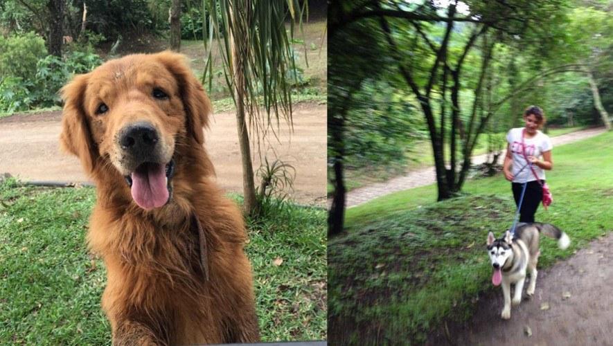parque-Jacarandas-de-Cayala-Ciudad-de-Guatemala-paseo-perro