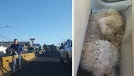 Guatemalteco rescató a un perro que caminaba entre el tráfico de la Aguilar Batres