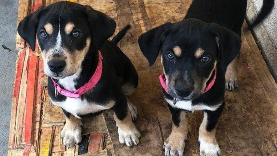 Feria de adopción de perros y gatos en Sumpango, Sacatepéquez | 2021